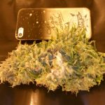 Mould Spotted On Marijuana Bud