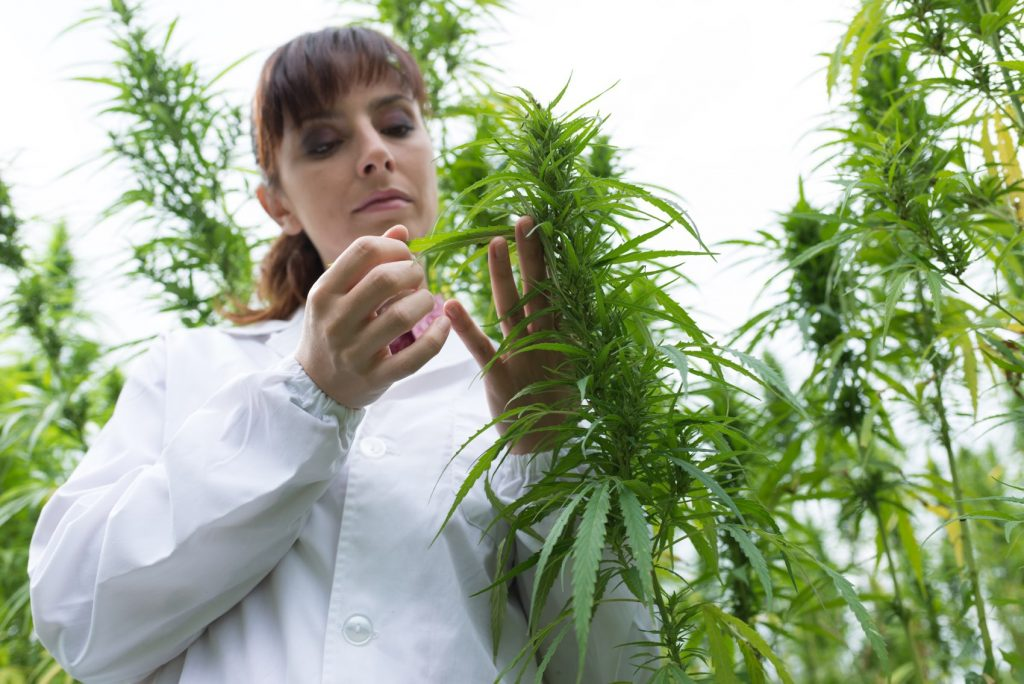 A Girl Scientist Checking Hemp Flowers