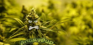 THC Real Angry Bud with Eyes Cartton-Illustration