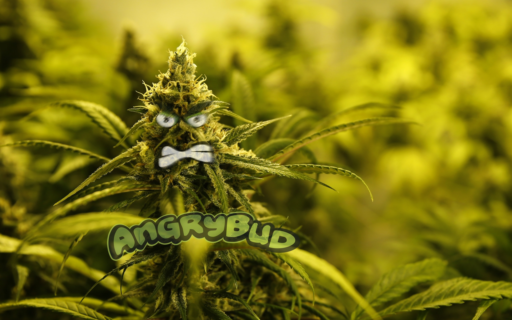 Mr. Angry Bud Itself in Person (Cannabis Wallpaper)
