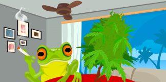 Buen Dia Happy Frog - Angrybud.com Official Cannabis Wallpaper HD