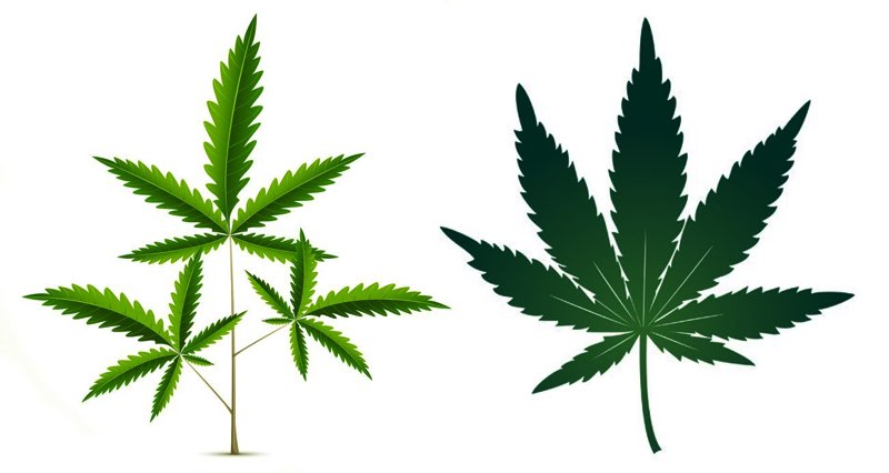 Indica vs Sativa - leaf shapes