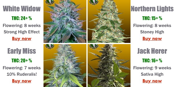Autofems - these are both feminized and autoflowering seeds, the best and the easiest solution to grow weed at home