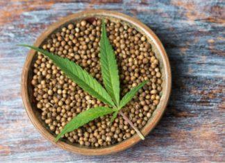 Marijuana Seeds find coffeeshop near me
