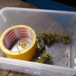 How to stock marijuana buds - learn the best ways to store your buds