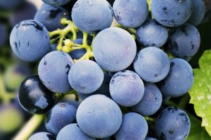 Anthocyanin except of cannabis flowers can be discovered in Grapes