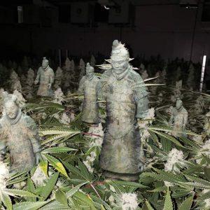 Cannabis Art - Terracotta Army