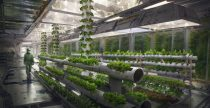 Marijuana Hydroponic Garden