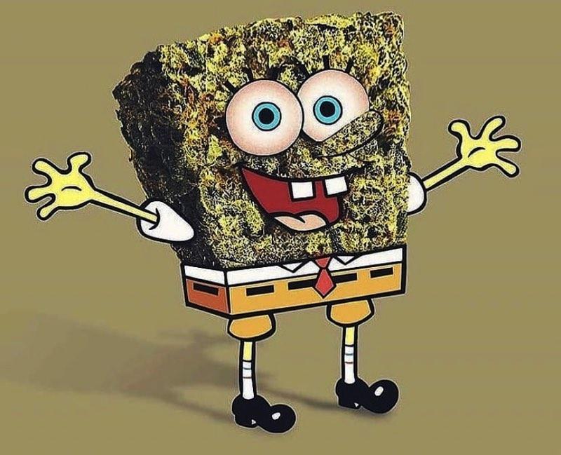 Bob Sponge New Marijuana Rules (spotted at mzstoned)